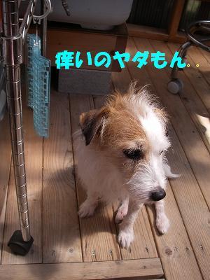 IMGP8717-s.jpg